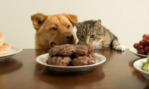 dog_and_cat_at_table